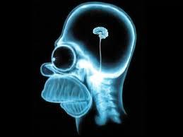 cerebro-homer-simpson