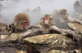 spa-babuinos