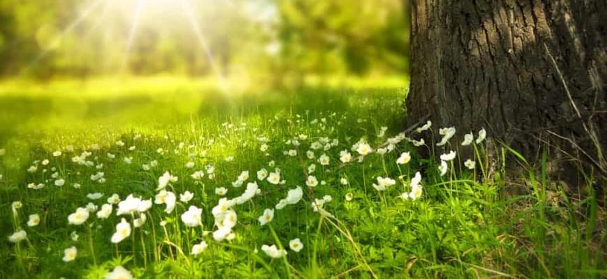 primavera-min