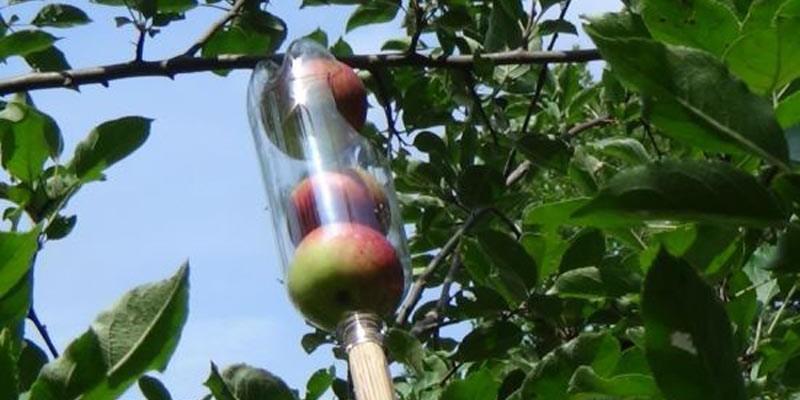 recolector-fruta-casero